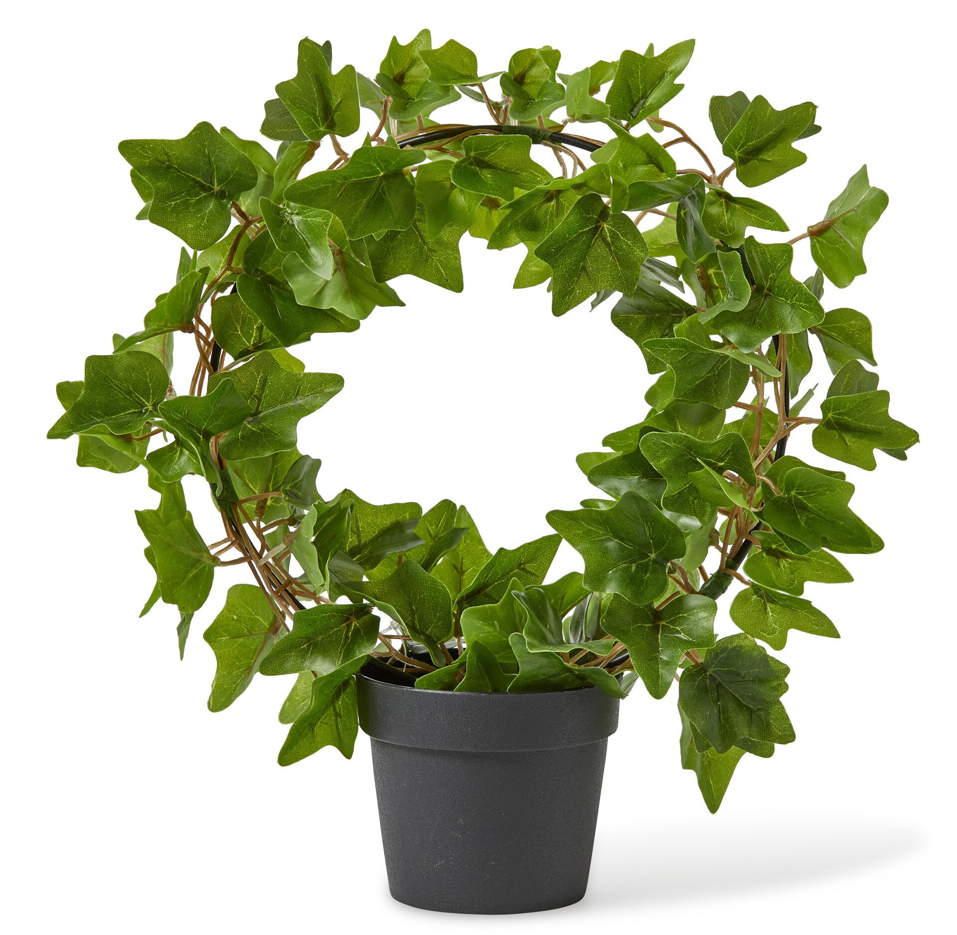 konstgjorda växter murgröna